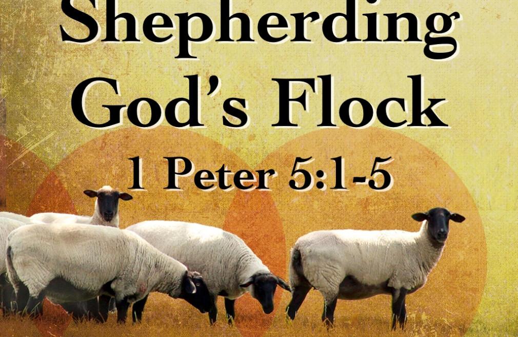 Shepherding Sunday